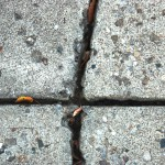 Caulking Repair – Driveway Joints Cause Problems